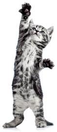 Kitten Life Stage