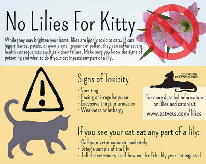 No Lilies For Kitty