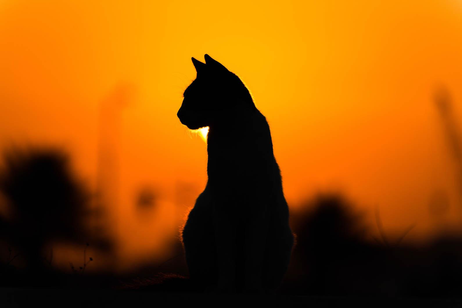 Internal Medicine For Cats Hero Photo